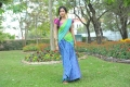 Iddarammayilatho Actress  Amala Paul Wallpapers