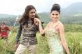 Dhanush, Amyra Dastur in Anekudu Telugu Movie Stills