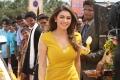 Actress Hansika Motwani HD Wallpapers in Aranmanai 2 Movie
