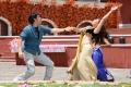 Nagarjuna, Richa Gangopadhyay in Bhai Movie Latest Stills
