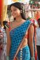Bindu Madhavi Half Saree Photos in Desingu Raja