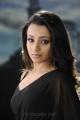 Actress Trisha in Black Saree  Photos