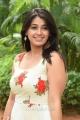Actress Chandni Bhagwanani Pics @ Ratham Pre Release