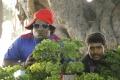 Yogi Babu, Tamizh in En Aaloda Seruppa Kaanom Movie Stills