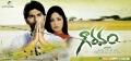 Allu Sirish, Yami Gautam in Gowravam Movie Wallpapers