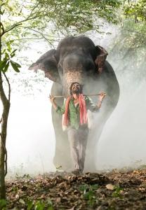 Actor Vishnu Vishal Kaadan Movie Images HD