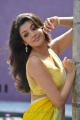Kajal Agarwal Hot Saree Stills in Businessman