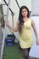 Actress Meera Chopra at Killadi Movie Press Meet Stills