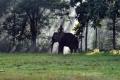 Vikram Prabhu drive a Elephant Kumki Tamil Movie