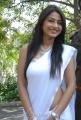 Actress Kumkum Saree Stills at Eduruleni Alexander Movie Launch