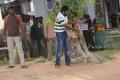 Kutti Puli Movie On Location Photos