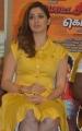 Actress Lakshmi Rai Photos @ Motta Siva Ketta Siva Press Meet