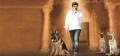 Actor Balakrishna in Legend Telugu Movie Stills