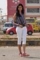 Lovely Actress Shanvi Latest Stills