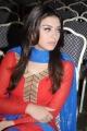 Tamil Actress Hansika Motwani @ Maan Karate Success Meet Stills