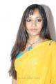 Telugu Actress Madhavi Latha Yellow Saree Stills