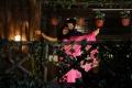 Marala Telupana Priya Movie Stills
