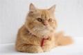 Selfie Cat in Meow Movie Stills