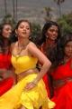 Actress Sindhu Tolani Hot in Mondi Mogudu Photos