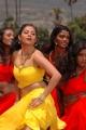 Actress Sindhu Tolani in Mondi Mogudu Movie New Photos
