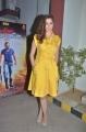 Raai Laxmi @ Motta Siva Ketta Siva Movie Press Meet Stills