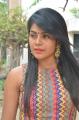 Tamil Actress Niharika Photos @ Eedili Movie Pooja