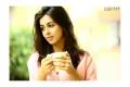 Tamil Actress Nikki Galrani Photoshoot Stills