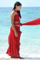 Actress Niti Taylor Hot Images in Pelli Pustakam Movie