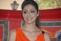 Parvathi Melton at Balakrishna New Movie Opening Stills