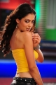 Srimannarayana Parvathi Melton Hot Pics in Yellow Dress