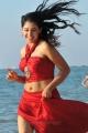 Actress Niti Taylor Hot in Pelli Pustakam Latest Stills