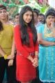 Actress Niti Taylor at Pelli Pusthakam Movie Opening Stills