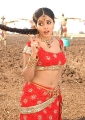 Poorna Hot in Seema Tapakaya, Poorna Latest Hot Pics