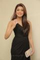 Tamil Actress Pranitha Hot Photos in Dark Brown Dress