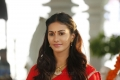 Heroine Amyra Dastur in Rajugadu Movie Photos HD