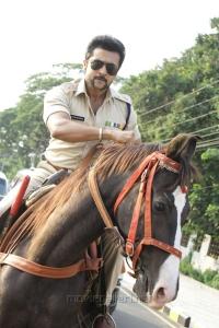 S3 Movie Suriya Photos