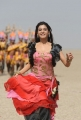 Actress Samantha Hot Pics from Dookudu Chulbuli Chulbuli Song