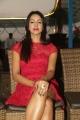 Actress Sanjjanaa at 31-12 NYE 2016 Curtain Raiser