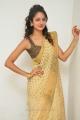 Actress Shanvi in Golden Color Saree Photos
