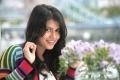 Mirattal Movie Heroine Sharmila Mandre New Stills