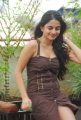 Sheena Shahabadi Latest Hot Pics