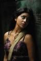 Telugu Actress Shirya Saran Hot Images