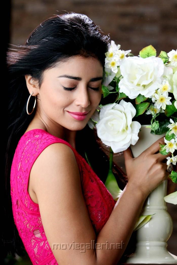 ... 409101   Shriya Saran Pavitra Movie Hot Photos   New Movie Posters