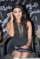 Actress Kavya M Shetty at Shivani Movie Logo Launch Stills