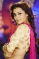 Actress Nisha Agarwal in Sukumarudu New Stills