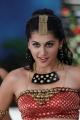 Telugu Actress Tapsee Hot Still in Daruvu