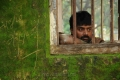Tamil Actor Pradeep in Therodum Veedhiyile Movie Stills