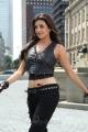 Kajal Agarwal Hot in Tiger Vishva Movie Stills