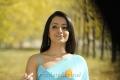 Trisha Hot Saree Images in Bodyguard Movie