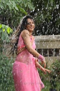 Kalavathi Movie Actress Trisha Hot Saree Stills